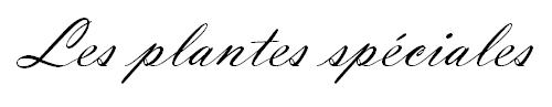 sans-titre-4-png.110240